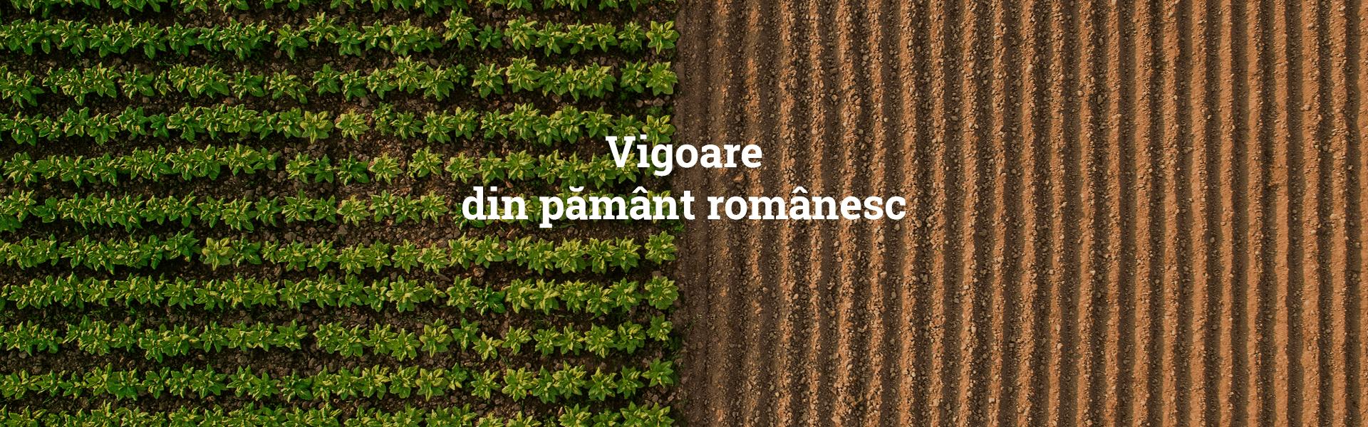 Vigoare din pământ românesc